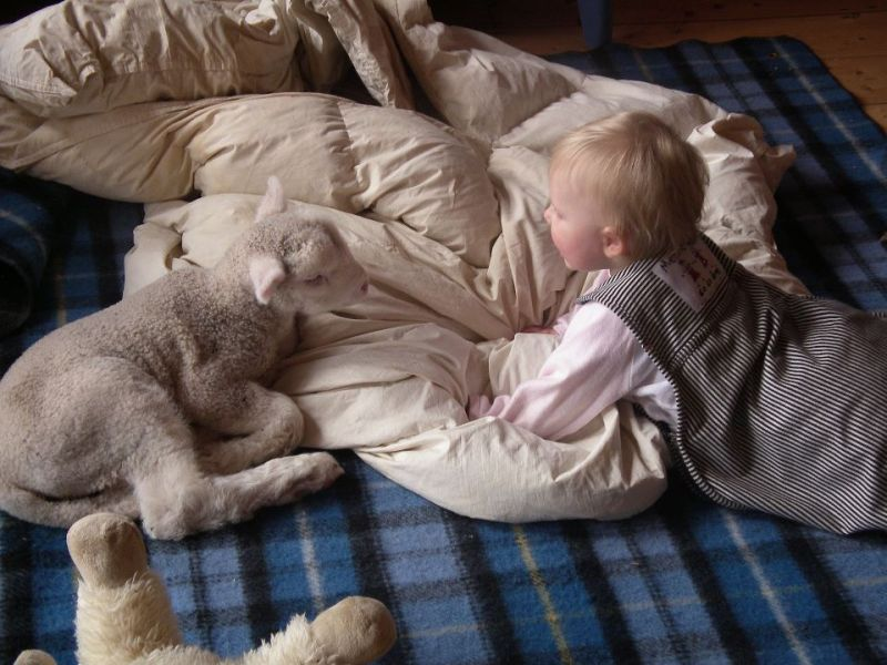 Our daughter Kate with rescue lamb Charlie